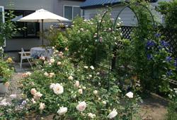 garden19